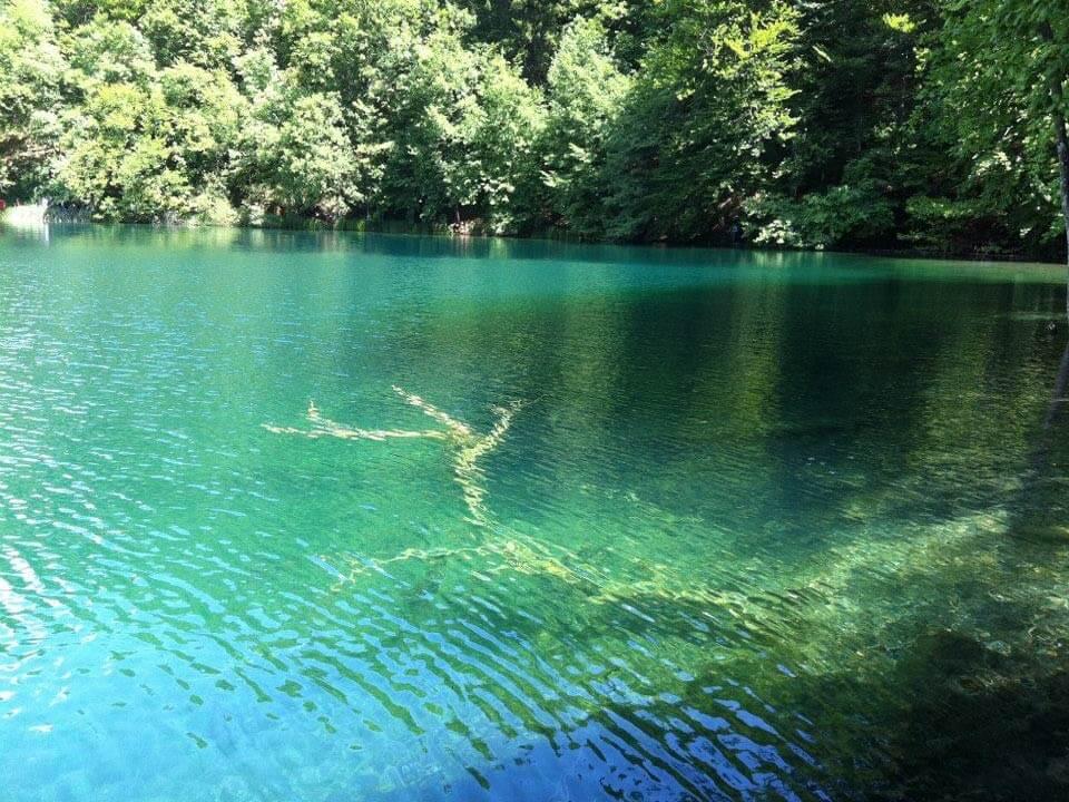 Plitvicei kiránduláson készült fénykép: Kristálytiszta vízbe dőlt fa