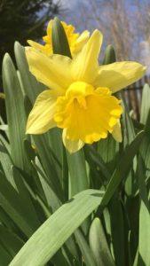 Lélek és természet hétvége Herenden - Virágzó természet