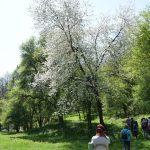 A Lélek és Természet hétvégén készült fénykép: Virágzó természet